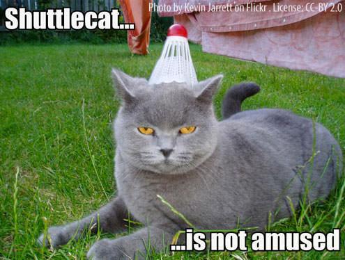 not amused cat